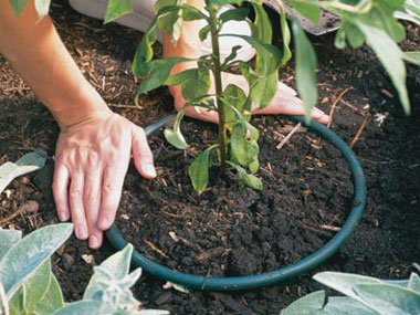 tips-for-easier-gardening-03-planter-sl